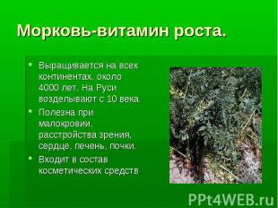 Морковь-витамин роста. Выращивается на всех континентах, около 4000 лет. На Руси