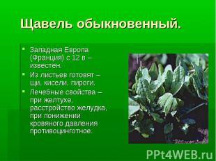 Щавель обыкновенный. Западная Европа (Франция) с 12 в – известен. Из листьев гот