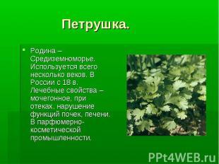 Петрушка. Родина – Средиземноморье. Используется всего несколько веков. В России