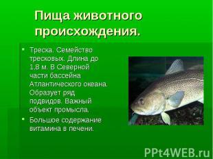 Пища животного происхождения. Треска. Семейство тресковых. Длина до 1,8 м. В Сев