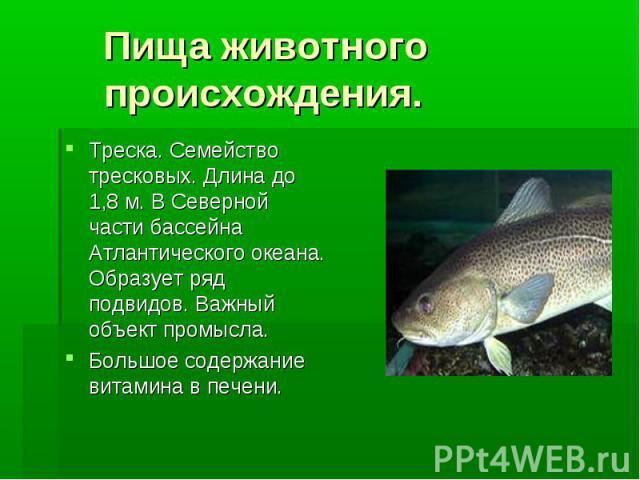 Пища животного происхождения. Треска. Семейство тресковых. Длина до 1,8 м. В Северной части бассейна Атлантического океана. Образует ряд подвидов. Важный объект промысла. Большое содержание витамина в печени.