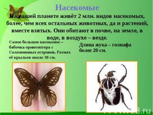 Самое большое насекомое – бабочка орнитоптера с Соломоновых островов. Размах её