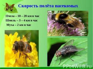Пчела – 10 – 20 км в час Пчела – 10 – 20 км в час Шмель – 3 – 4 км в час Муха –