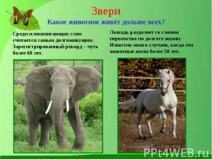 Среди млекопитающих слон считается самым долгоживущим. Зарегистрированный рекорд