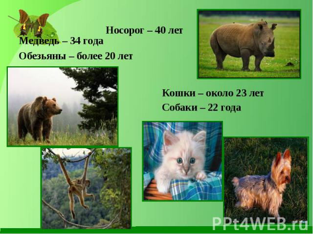 Медведь – 34 года Медведь – 34 года Обезьяны – более 20 лет