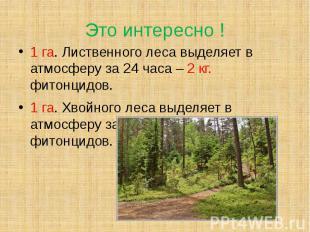 Это интересно ! 1 га. Лиственного леса выделяет в атмосферу за 24 часа – 2 кг. ф