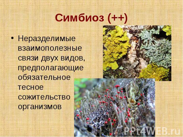 Симбиоз (++) Неразделимые взаимополезные связи двух видов, предполагающие обязательное тесное сожительство организмов