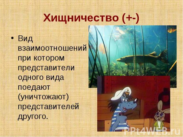 Хищничество (+-) Вид взаимоотношений при котором представители одного вида поедают (уничтожают) представителей другого.