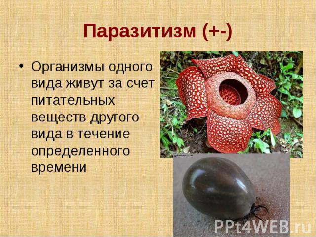 Паразитизм (+-) Организмы одного вида живут за счет питательных веществ другого вида в течение определенного времени
