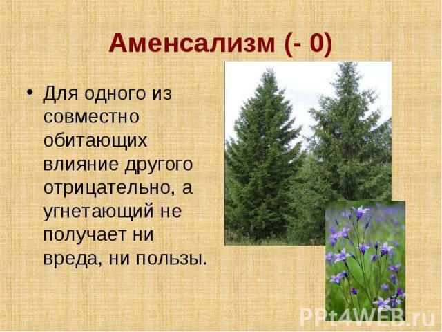 Аменсализм (- 0) Для одного из совместно обитающих влияние другого отрицательно, а угнетающий не получает ни вреда, ни пользы.