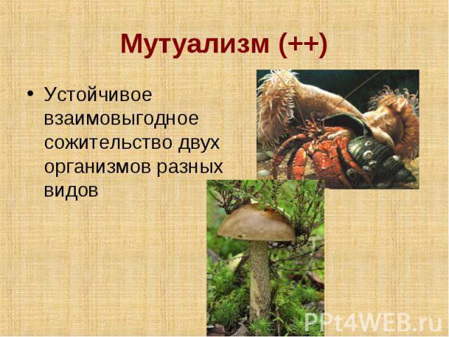 Мутуализм (++) Устойчивое взаимовыгодное сожительство двух организмов разных видов