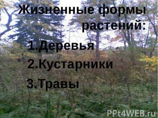 Жизненные формы растений: