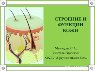 Мамедова С.А. Мамедова С.А. Учитель биологии МБОУ «Средняя школа №6»
