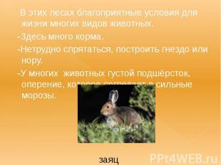 В этих лесах благоприятные условия для жизни многих видов животных. В этих лесах