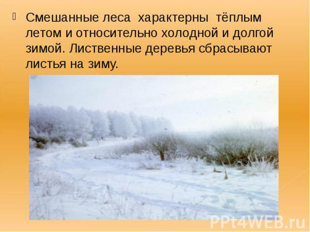 Смешанные леса характерны тёплым летом и относительно холодной и долгой зимой. Лиственные деревья сбрасывают листья на зиму. Смешанные леса характерны тёплым летом и относительно холодной и долгой зимой. Лиственные деревья сбрасывают листья на зиму.