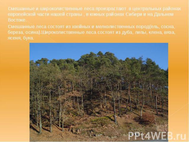 Смешанные и широколиственные леса произрастают в центральных районах европейской части нашей страны , в южных районах Сибири и на Дальнем Востоке. Смешанные и широколиственные леса произрастают в центральных районах европейской части нашей страны , …