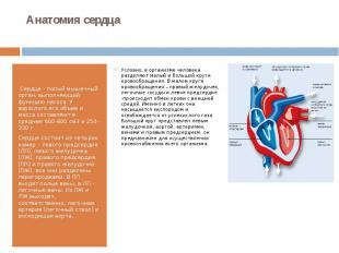 Анатомия сердца Сердце - полый мышечный орган, выполняющий функцию насоса.