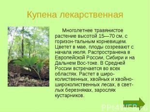 Купена лекарственная Многолетнее травянистое растение высотой 15—70 см, с горизо