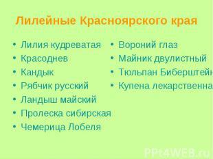 Лилейные Красноярского края Лилия кудреватая Красоднев Кандык Рябчик русский Лан