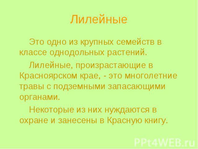 Лилейные Это одно из крупных семейств в классе однодольных растений. Лилейные, произрастающие в Красноярском крае, - это многолетние травы с подземными запасающими органами. Некоторые из них нуждаются в охране и занесены в Красную книгу.