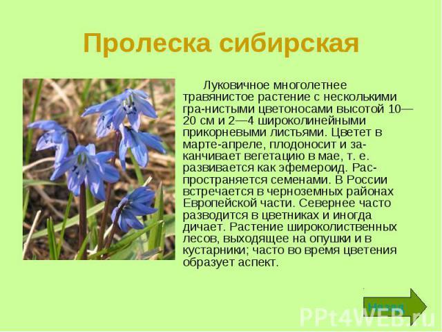 Пролеска сибирская Луковичное многолетнее травянистое растение с несколькими гра-нистыми цветоносами высотой 10—20 см и 2—4 широколинейными прикорневыми листьями. Цветет в марте-апреле, плодоносит и заканчивает вегетацию в мае, т. е. развиваетс…