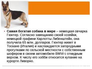 Самая богатая собака в мире – немецкая овчарка Гюнтер. Согласно завещанию своей