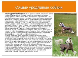 Самой уродливой собакой мира признан кобель китайской голой собаки по имени Сэм.