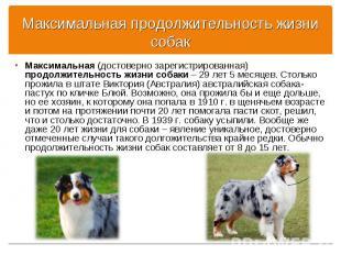 Максимальная (достоверно зарегистрированная) продолжительность жизни собаки – 29