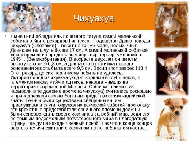 Нынешний обладатель почетного титула самой маленькой собачки в Книге рекордов Гиннесса – годовалая Данка породы чихуахуа (Словакия) – весит не так уж мало, целых 765 г. Длина ее тела чуть более 17 см. А самой маленькой собачкой «всех времен и народо…