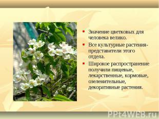 Значение цветковых для человека велико. Значение цветковых для человека велико.