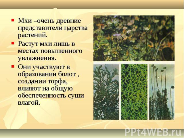 Мхи –очень древние представители царства растений. Мхи –очень древние представители царства растений. Растут мхи лишь в местах повышенного увлажнения. Они участвуют в образовании болот , создании торфа, влияют на общую обеспеченность суши влагой.