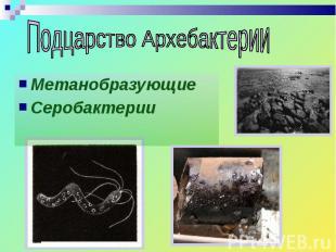 Метанобразующие Метанобразующие Серобактерии