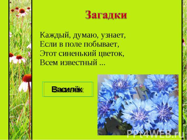 Каждый, думаю, узнает, Если в поле побывает, Этот синенький цветок, Всем известный ... Каждый, думаю, узнает, Если в поле побывает, Этот синенький цветок, Всем известный ...