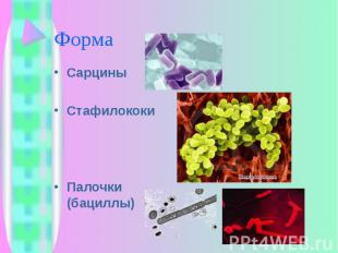 Сарцины Сарцины Стафилококи Палочки (бациллы)
