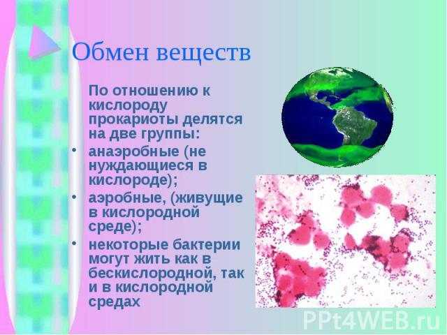По отношению к кислороду прокариоты делятся на две группы: По отношению к кислороду прокариоты делятся на две группы: анаэробные (не нуждающиеся в кислороде); аэробные, (живущие в кислородной среде); некоторые бактерии могут жить как в бескислородно…