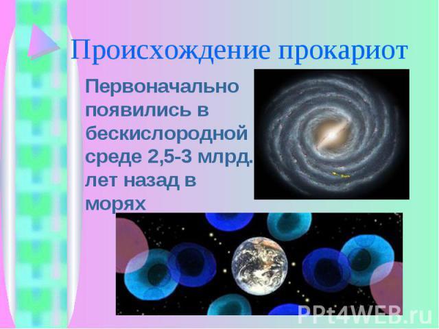 Первоначально появились в бескислородной среде 2,5-3 млрд. лет назад в морях Первоначально появились в бескислородной среде 2,5-3 млрд. лет назад в морях