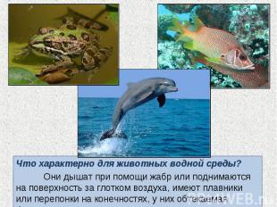 Что характерно для животных водной среды? Что характерно для животных водной сре