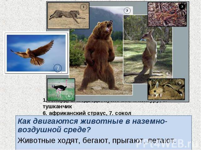 Как двигаются животные в наземно-воздушной среде? Как двигаются животные в наземно-воздушной среде? Животные ходят, бегают, прыгают, летают.