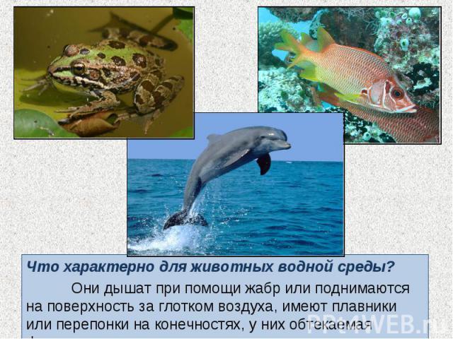 Что характерно для животных водной среды? Что характерно для животных водной среды? Они дышат при помощи жабр или поднимаются на поверхность за глотком воздуха, имеют плавники или перепонки на конечностях, у них обтекаемая форма тела.