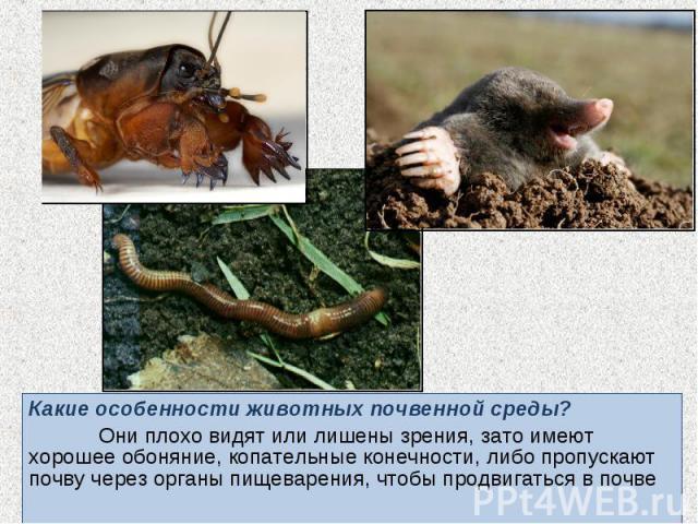 Какие особенности животных почвенной среды? Какие особенности животных почвенной среды? Они плохо видят или лишены зрения, зато имеют хорошее обоняние, копательные конечности, либо пропускают почву через органы пищеварения, чтобы продвигаться в почве