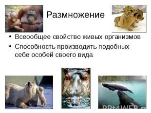 Размножение Всеообщее свойство живых организмов Способность производить подобных