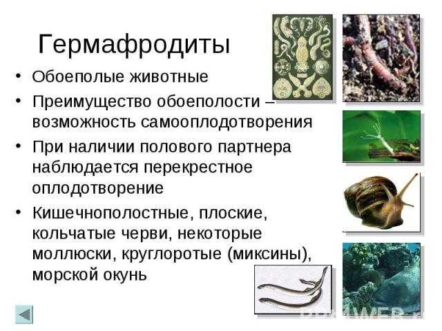 Гермафродиты Обоеполые животные Преимущество обоеполости – возможность самооплодотворения При наличии полового партнера наблюдается перекрестное оплодотворение Кишечнополостные, плоские, кольчатые черви, некоторые моллюски, круглоротые (миксины), мо…