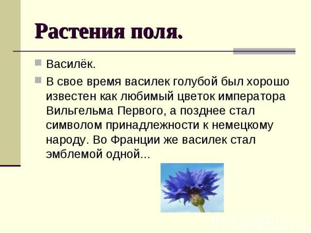 Растения поля. Василёк. В свое время василек голубой был хорошо известен как любимый цветок императора Вильгельма Первого, а позднее стал символом принадлежности к немецкому народу. Во Франции же василек стал эмблемой одной...