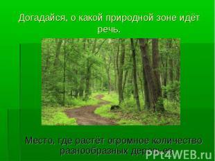 Место, где растёт огромное количество разнообразных деревьев.