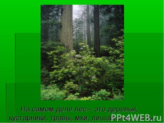 На самом деле лес – это деревья, кустарники, травы, мхи, лишайники, грибы. На самом деле лес – это деревья, кустарники, травы, мхи, лишайники, грибы.