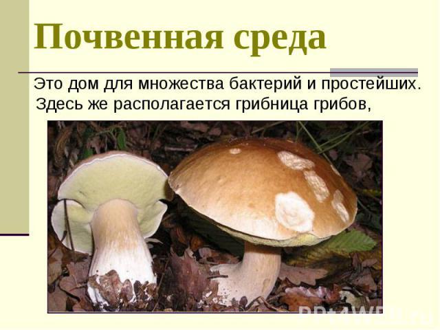 Это дом для множества бактерий и простейших. Здесь же располагается грибница грибов, Это дом для множества бактерий и простейших. Здесь же располагается грибница грибов,