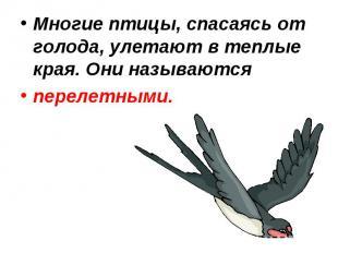 Многие птицы, спасаясь от голода, улетают в теплые края. Они называются перелетн
