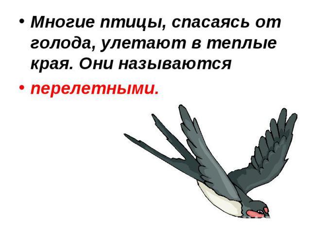 Многие птицы, спасаясь от голода, улетают в теплые края. Они называются перелетными.