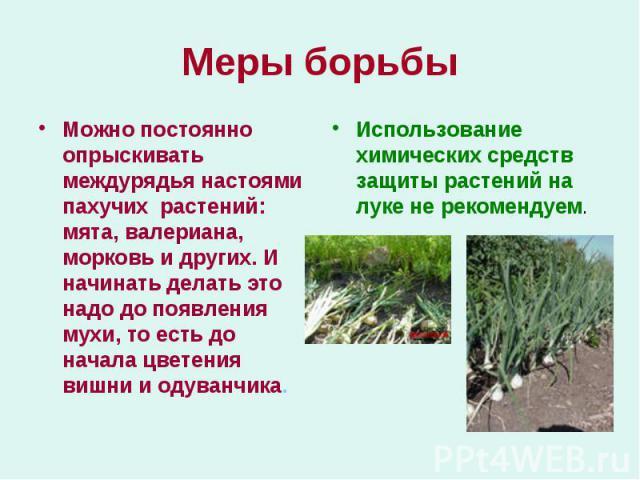 Можно постоянно опрыскивать междурядья настоями пахучих растений: мята, валериана, морковь и других. И начинать делать это надо до появления мухи, то есть до начала цветения вишни и одуванчика. Можно постоянно опрыскивать междурядья настоями пахучих…