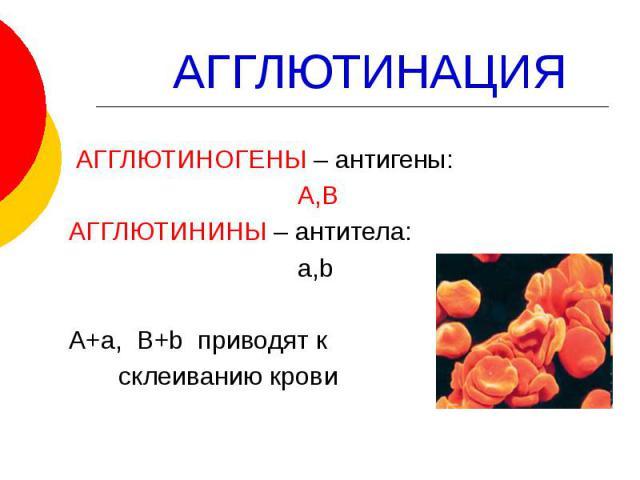 АГГЛЮТИНАЦИЯ АГГЛЮТИНОГЕНЫ – антигены: А,В АГГЛЮТИНИНЫ – антитела: a,b А+а, B+b приводят к склеиванию крови
